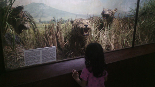 museum-zoology